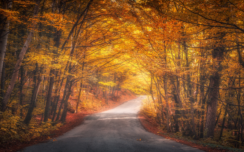Farnell Jaguar's Guide To Autumn Driving